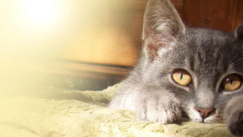 hitteplan voor katten