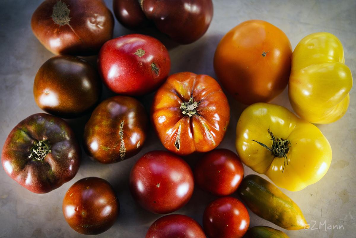 z widokiem na stol   zachwycam się pomidorami { dawnych odmian }