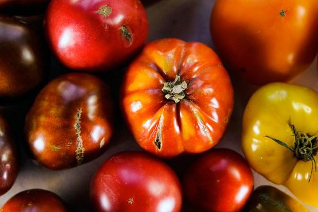 z widokiem na stol | zachwycam się pomidorami...