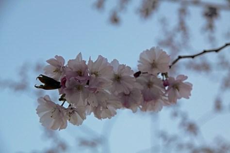 Swedish Spring