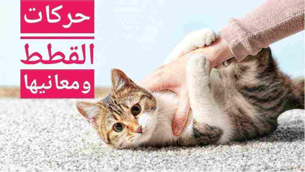 تصرفات القطط ومعانيها وأصوات القطط ومعانيها زيادة