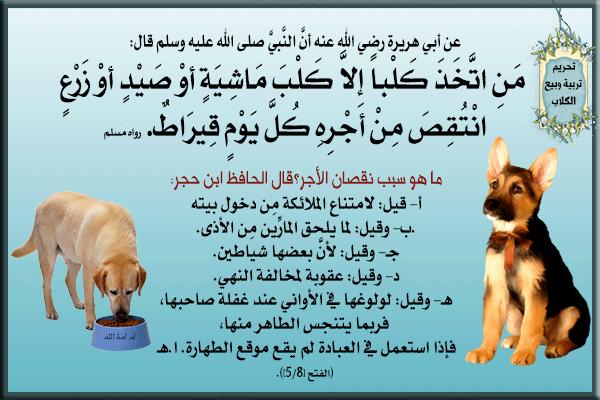 ما حكم تربية الكلاب وما هي شروط تربية الكلاب زيادة