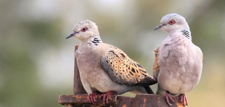 لماذا تلتصق الطيور بمنقارها من خلال ريشها؟