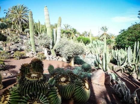 Zoo Fuertaventura kaktusy