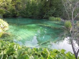 Plitwickie Jeziora widoczne dno Chorwacja