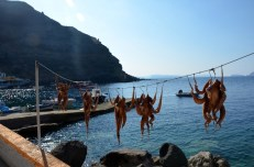 Owoce morza w porcie Oia Santorini