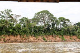 Dżungla na brzegach Peru