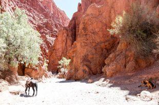 Incas Canyon Tupiza Boliwia