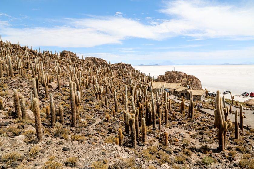 Isla Incahuasi Salar de Uyuni 2 Boliwia