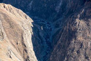 Kondory w kanionie Colca Peru