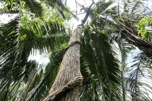 W dżungli amazońskiej 2 Peru