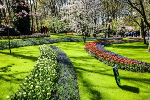 Ogrody Keukenhof w okolicy Amsterdamu