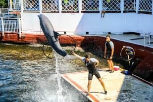 Akrobacje delfiny Cienfuegos Kuba