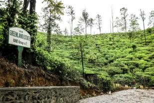 Ella plantacje herbaty 2