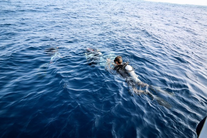 Malediwy nurkowanie z rekinami