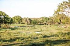 Park Narodowy Yala 14