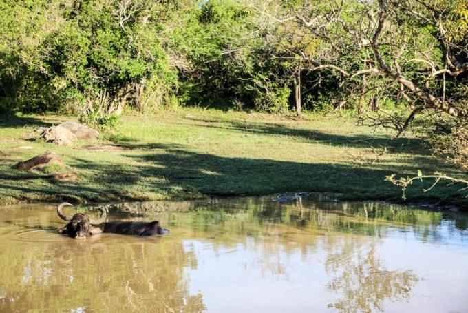 Park Narodowy Yala 4