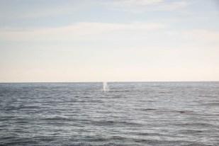 Rejs na oglądanie wielorybów Mirissa 4