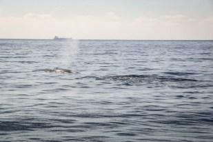 Rejs na oglądanie wielorybów Mirissa 6