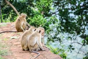 Sigiriya Lwia Skała małpy