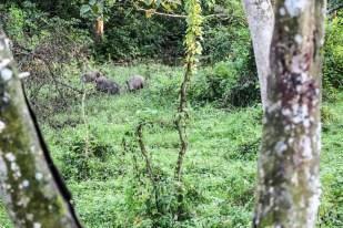 Nepal Chitwan safari dziki