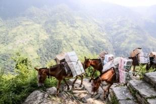 Nepal trekking do ABC wioska po drugiej stronie doliny i osły