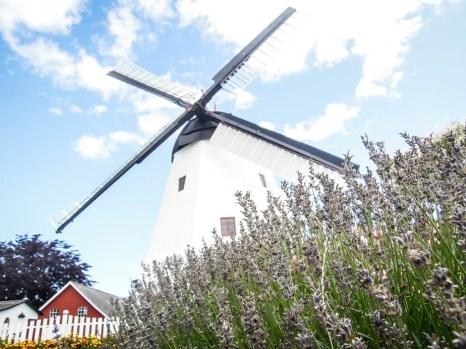 Bornholm młyn Allinge