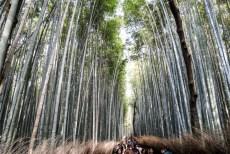 Las bambusowy Bamboo Grove