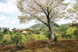 Świątynia Kinkaku-ji Kyoto