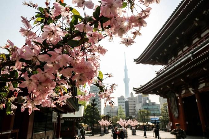 Tokyo Skytree z Asakusy
