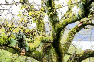 Przyroda Szkocja Ben Lomond