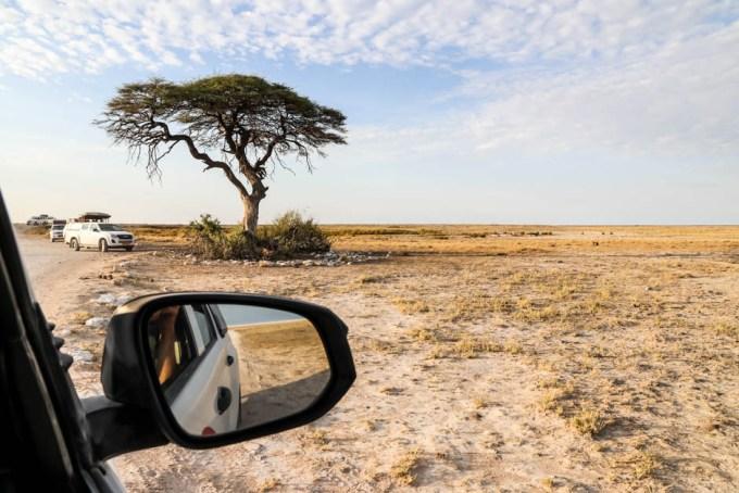 Safari w PN Etosha lwy