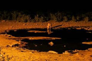 Safari w PN Etosha nosorożec oczko