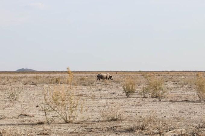 Safari w PN Etosha nosorożer 2