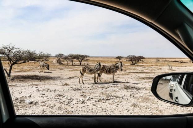 Safari w PN Etosha zebry auto