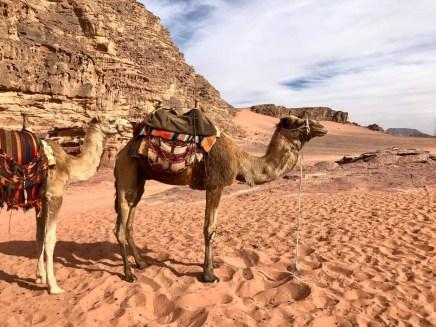 Wycieczka jeepami Wadi Rum wielbłądy 2