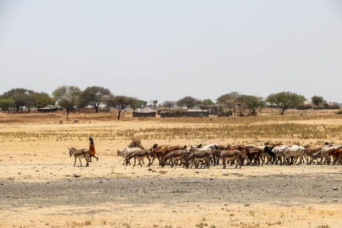 Tanzania pastwiska