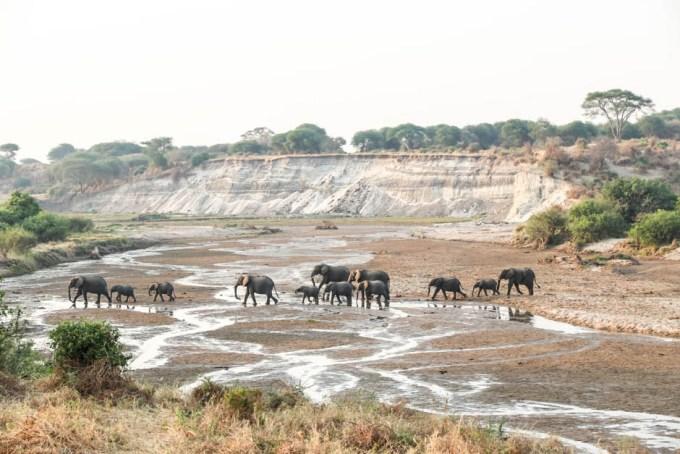 Tanzania PN Tarangire slonie rzeka
