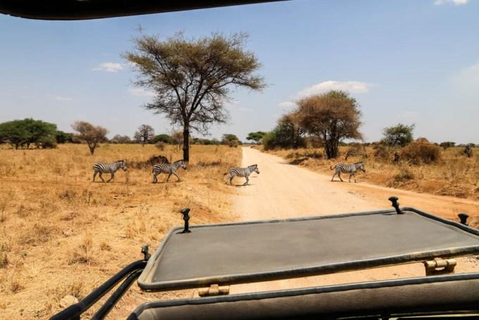 Tanzania PN Tarangire zebry