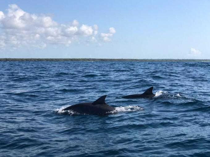 Zanzibar delfiny