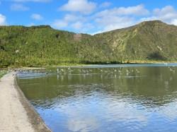 Lagoa do Fogo fauna