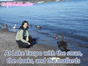 Lake Taupo with the swans, the ducks, and the mallards