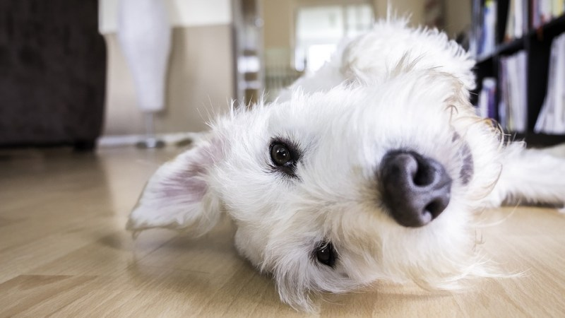 Cani E Gatti Qual è Lanimale Più Intelligente Secondo Uno Studio