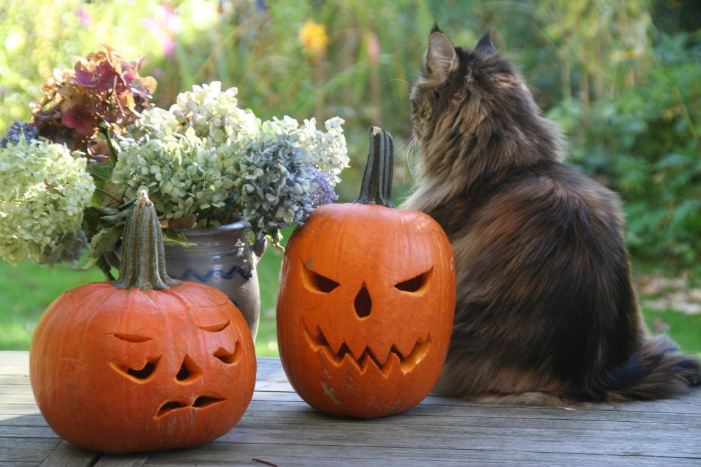 Cats and jack-o-lanterns scream October and Halloween.