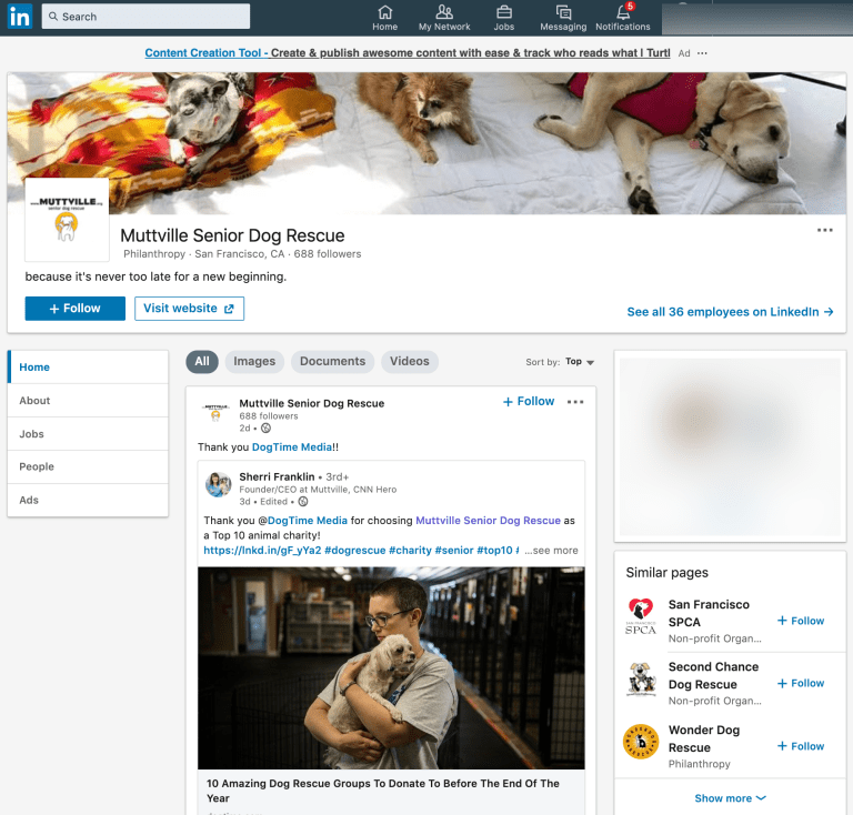 Image of Muttville Senior Dog Rescue's LinkedIn page.