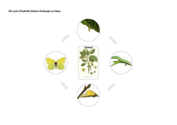 Butterfly life-cycle on Utøya landscape;, Image Courtesy © 3RW arkitekter
