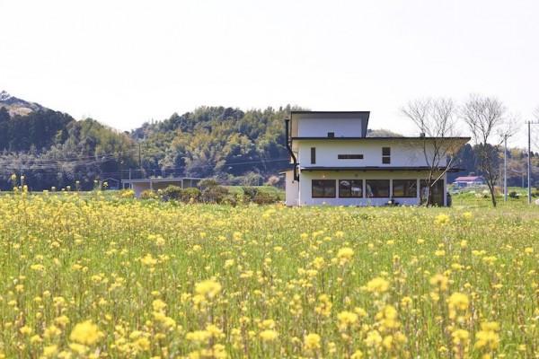 Image Courtesy © Hisashi Okamoto