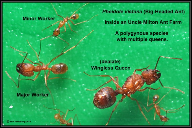 How To Get Rid Of Ants Complete Guide To Diy Natural Ant Treatments Fire
