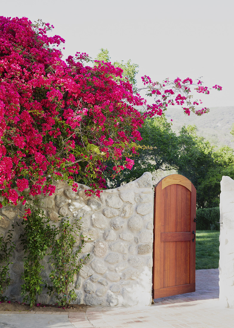 Bougainvillea Photos Design Ideas Remodel And Decor