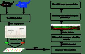 Gene and miRNA arrays   Cornell University College of